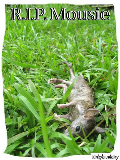 Poor Dead Mouse