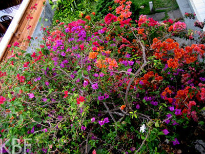 Flowers at Kintamani
