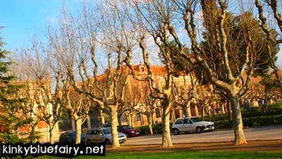trees, barcelona