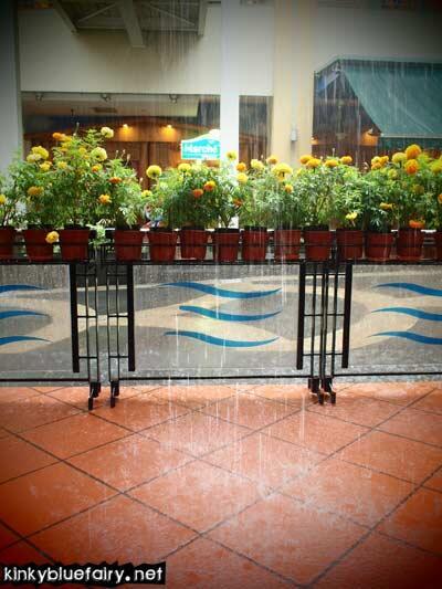 rain @ kl