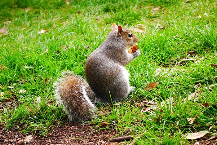aa-london-yishyene-11-squirrel-hyde-park