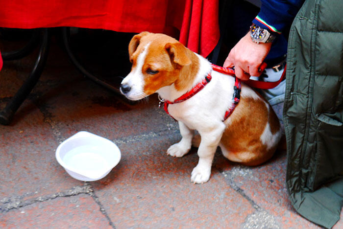 bologna-italy-15-dog