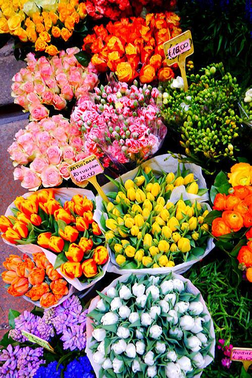 bologna-italy-39-flowers