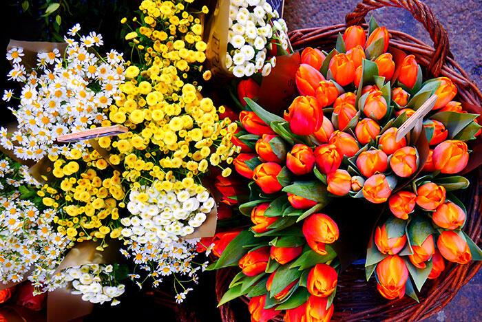 bologna-italy-41-flowers