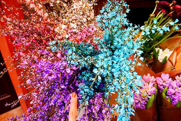 bologna-italy-42-flowers
