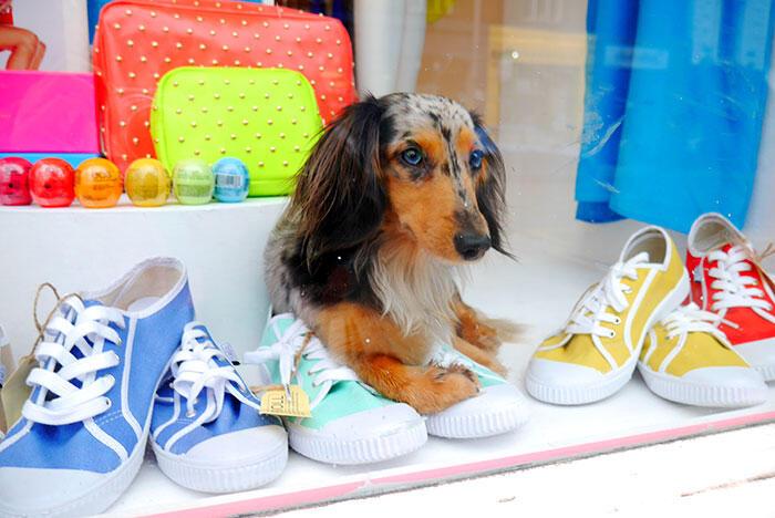 cc-dog-in-window-display-london