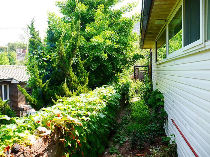 airbnb-seoul-jongno--2-house-rooftop-garden-1