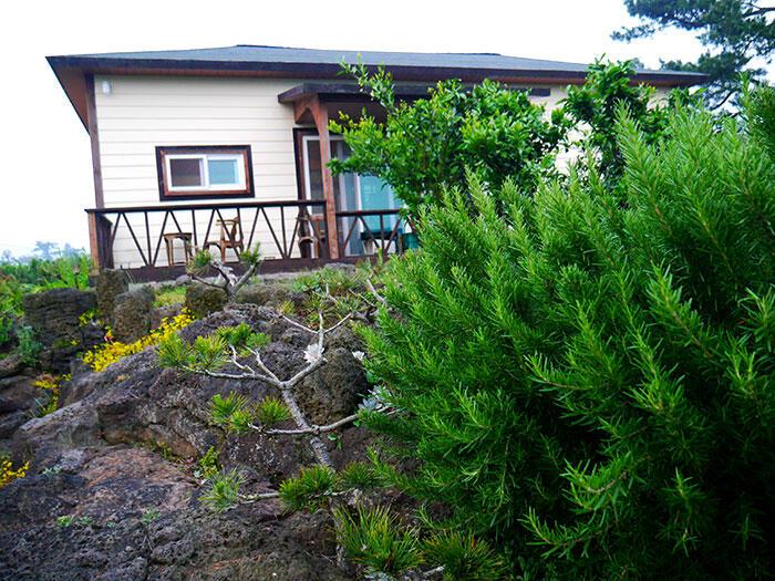 jeju-citrus-b&b-airbnb-11