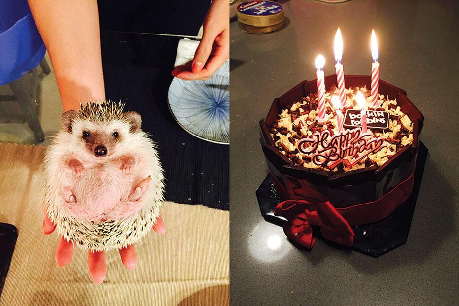 Joyce-birthday-2015-3-hedgehog-baskin-robbins-ice-cream-cake