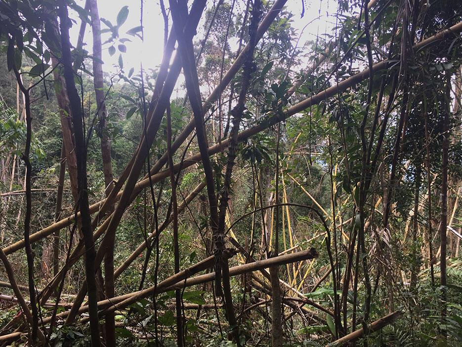 bukit-kutu-kuala-kubu-bharu-hiking-malaysia-11-bamboo-storm-aftermath