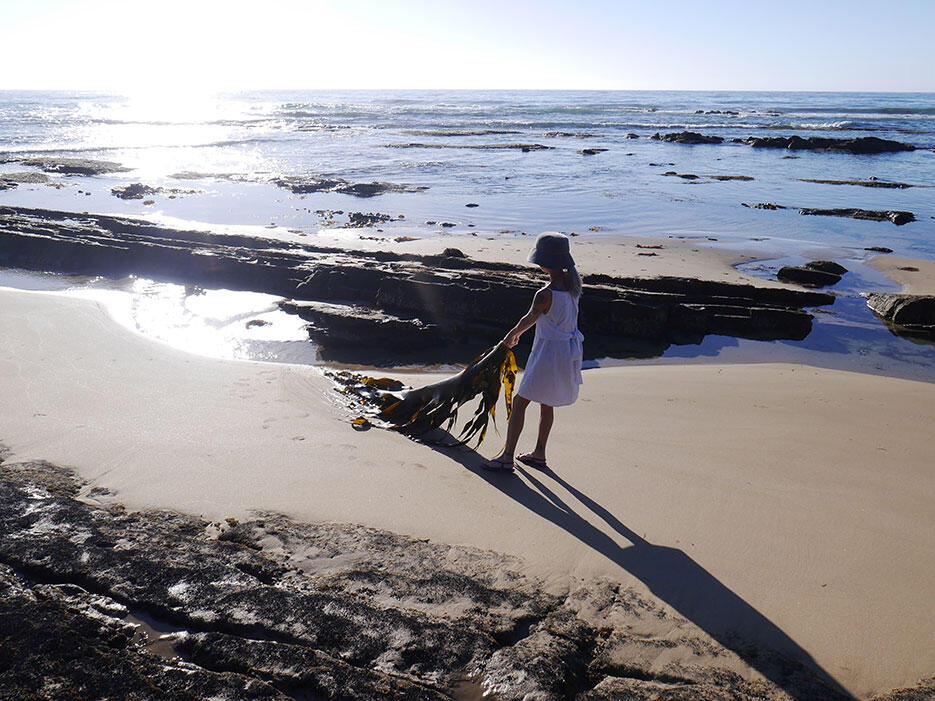 great-ocean-road-25-victoria-australia-rock-beach-kelp