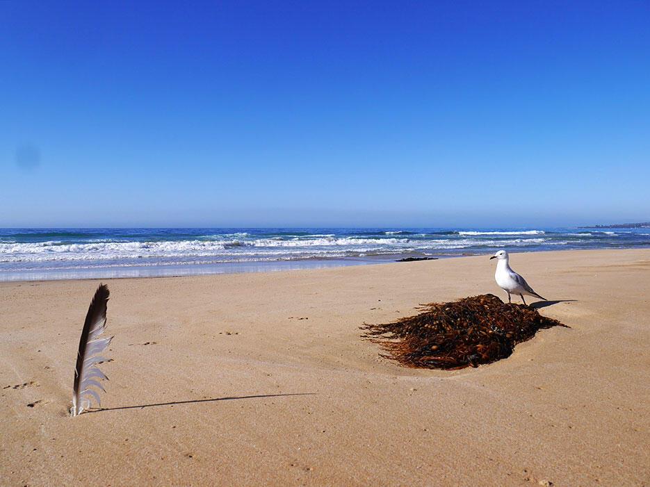great-ocean-road-30-victoria-australia-sea-ocean-feather-seagulls