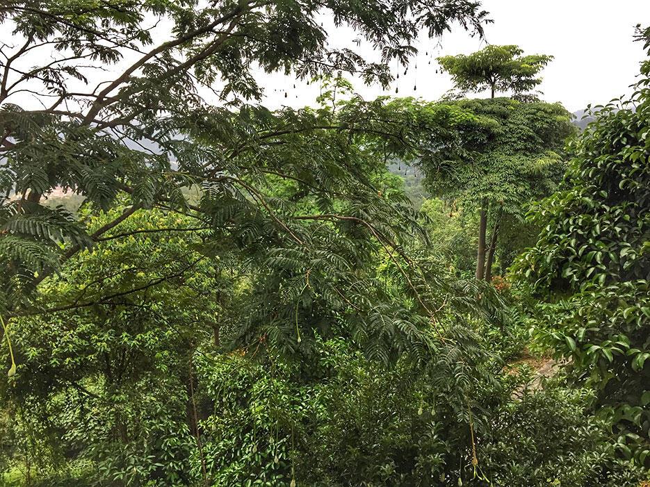 awanmulan-senja-seremban-33--nature-malaysia
