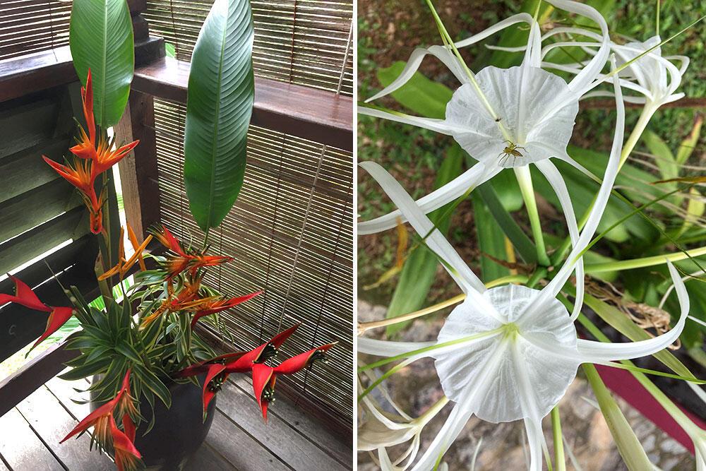 awanmulan-senja-seremban-34-bird-of-paradise-nature-malaysia