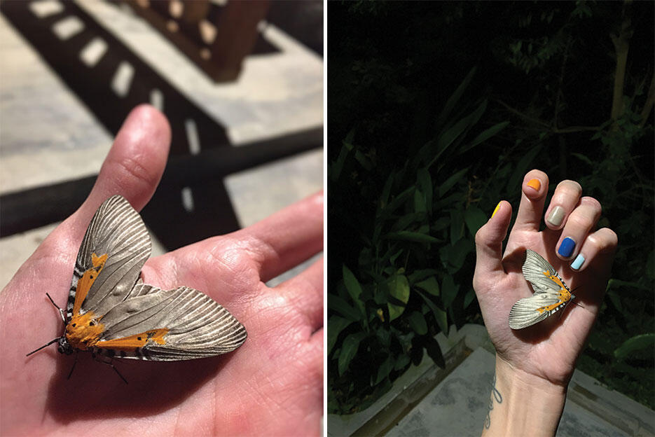 a-the-dusun-seremban-lanai-16-orange-moth-at-night